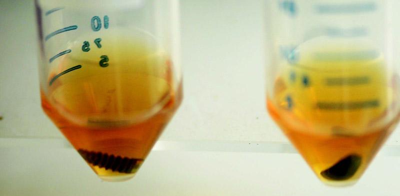 impact-of-argon-plasma-treatment-on-microbiological-surface-receptivity-of-titanium-implants-an-in-vitro-study